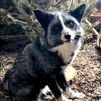 Twin Valley Zoo Adopt Kari